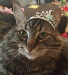 Cat Crown Pic