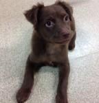 PITA Puppy